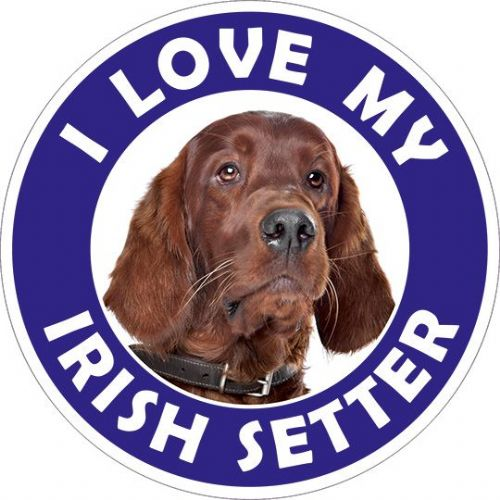 Irish Setter sticker